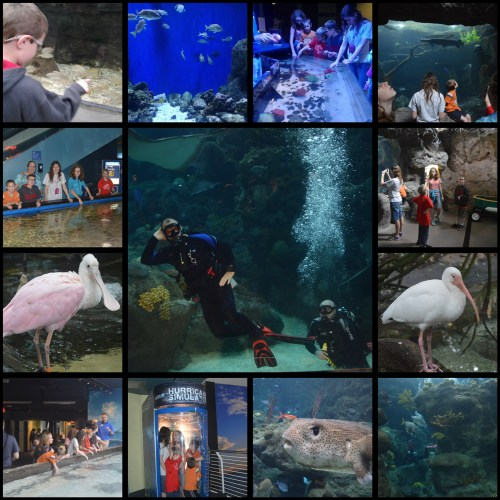 Florida Aquarium Collage