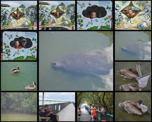 Manatee Viewing Center Collage