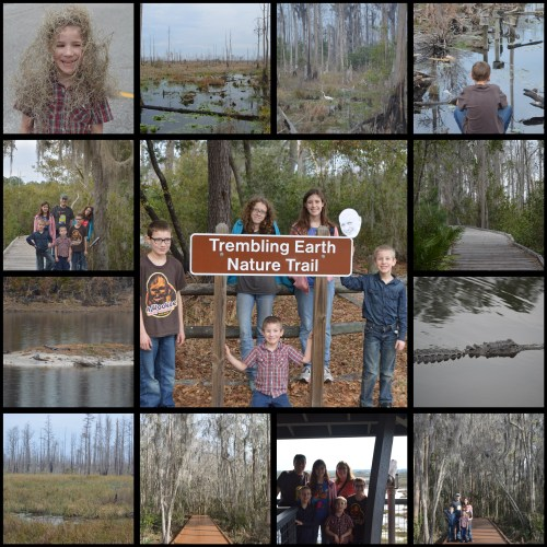 Okeefenokee Collage