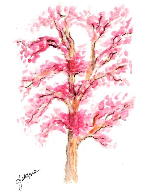 Pink Blooming Tree